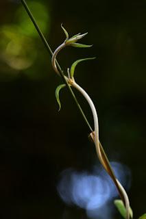 Light illuminating creative nature photography