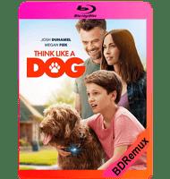 THINK LIKE A DOG (2020) BDREMUX 1080P MKV ESPAÑOL LATINO