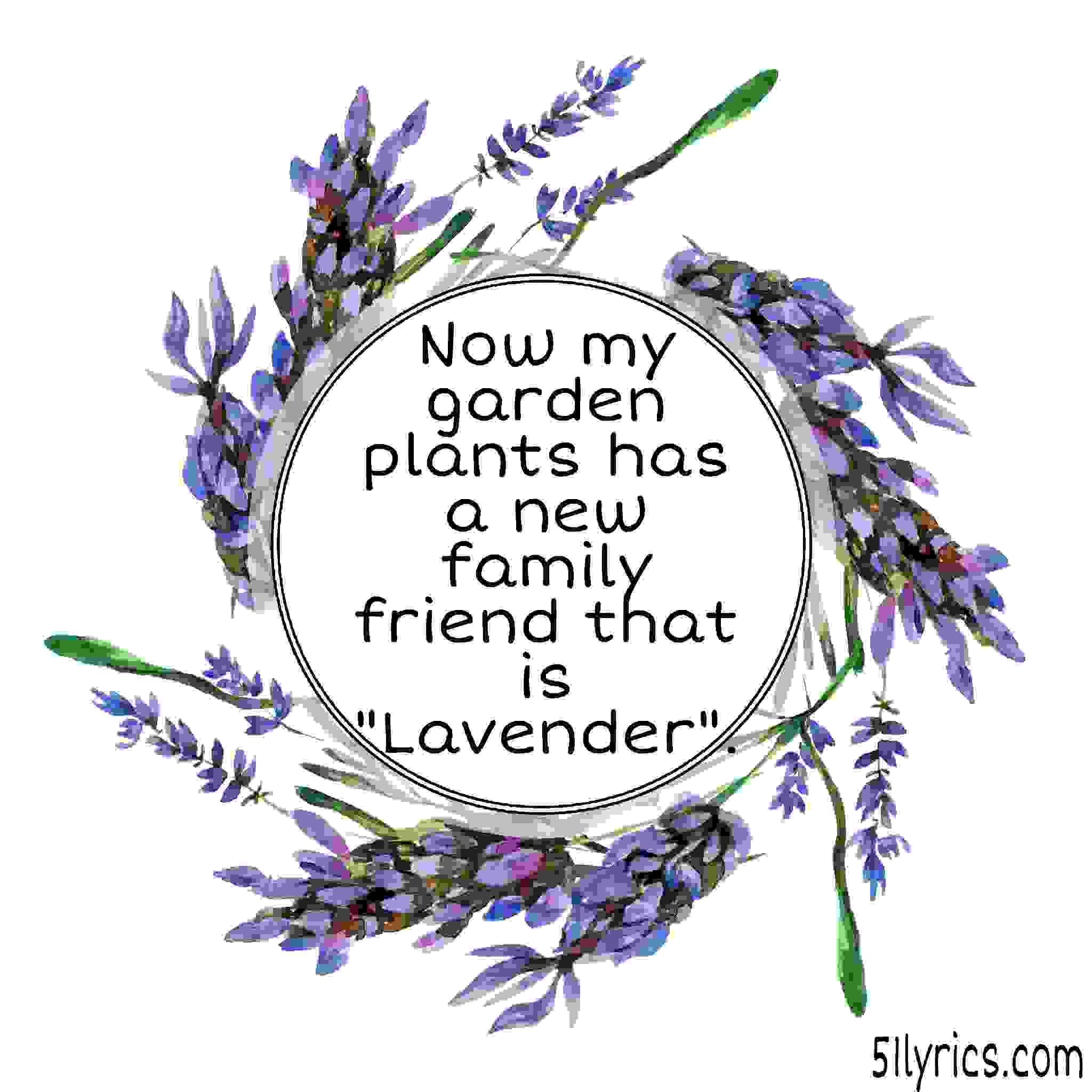 Lavender captions for Instagram,  lavender quotes, lavender funny quotes