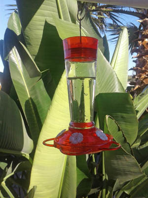 Photo of my hummingbird feeder
