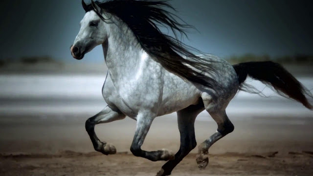 horse images free download hd, black horse images free download, white horse images free, horse images hd, horse pictures to print, horse images wallpaper, white horse pictures wallpaper, two horse images, horse pictures funny, horse, horses, horse images, horse pictures free download, free horse images clip art, photo finish horse racing download free, royalty free horse images, free download, horse videos, black horse images, horse pictures free use, horse animal images, arbi black horse images, funny horse videos, images, horse (domesticated animal), free video backgrounds download, free horse pictures to color, download free,war horse trailer hd.