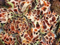 1000 Rahasia khasiat sarang semut