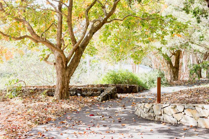 noosa botanical gardens walk