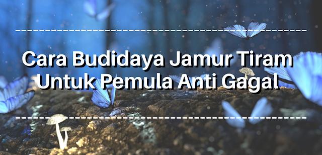 Cara Budidaya Jamur Tiram Untuk Pemula Anti Gagal