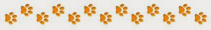 dog paw prints used as separator
