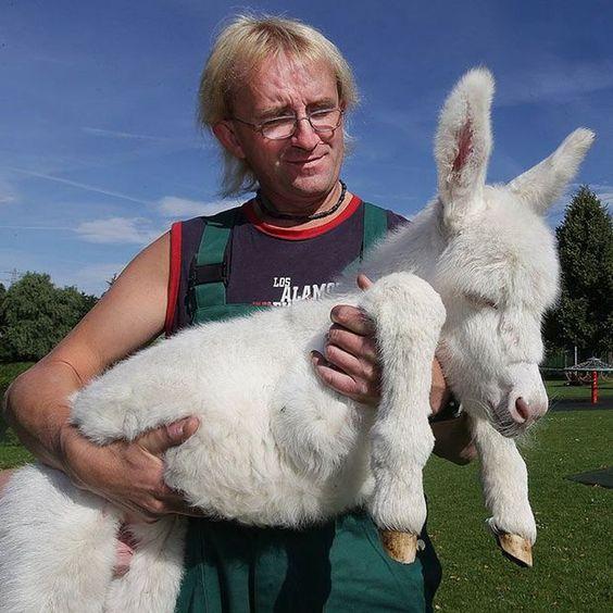 Equini Asini | A-Z List of 125 Rare Albino Animals [Pics]