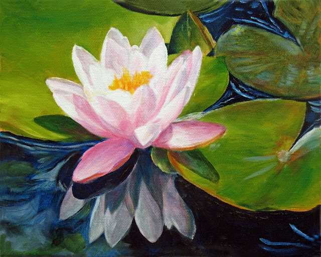 lotus, water lily, flower, pond