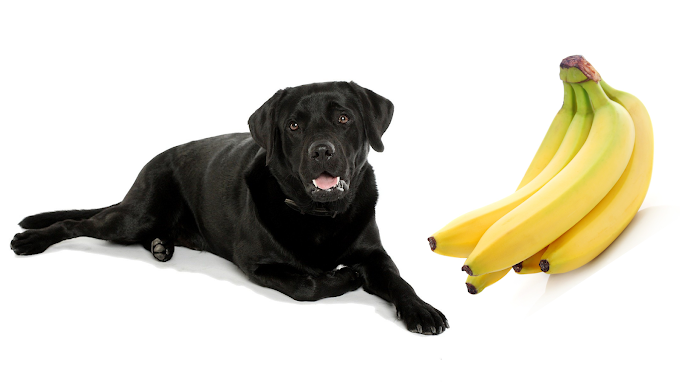 Can Dogs Eat Bananas? Are Bananas Safe For Dogs?