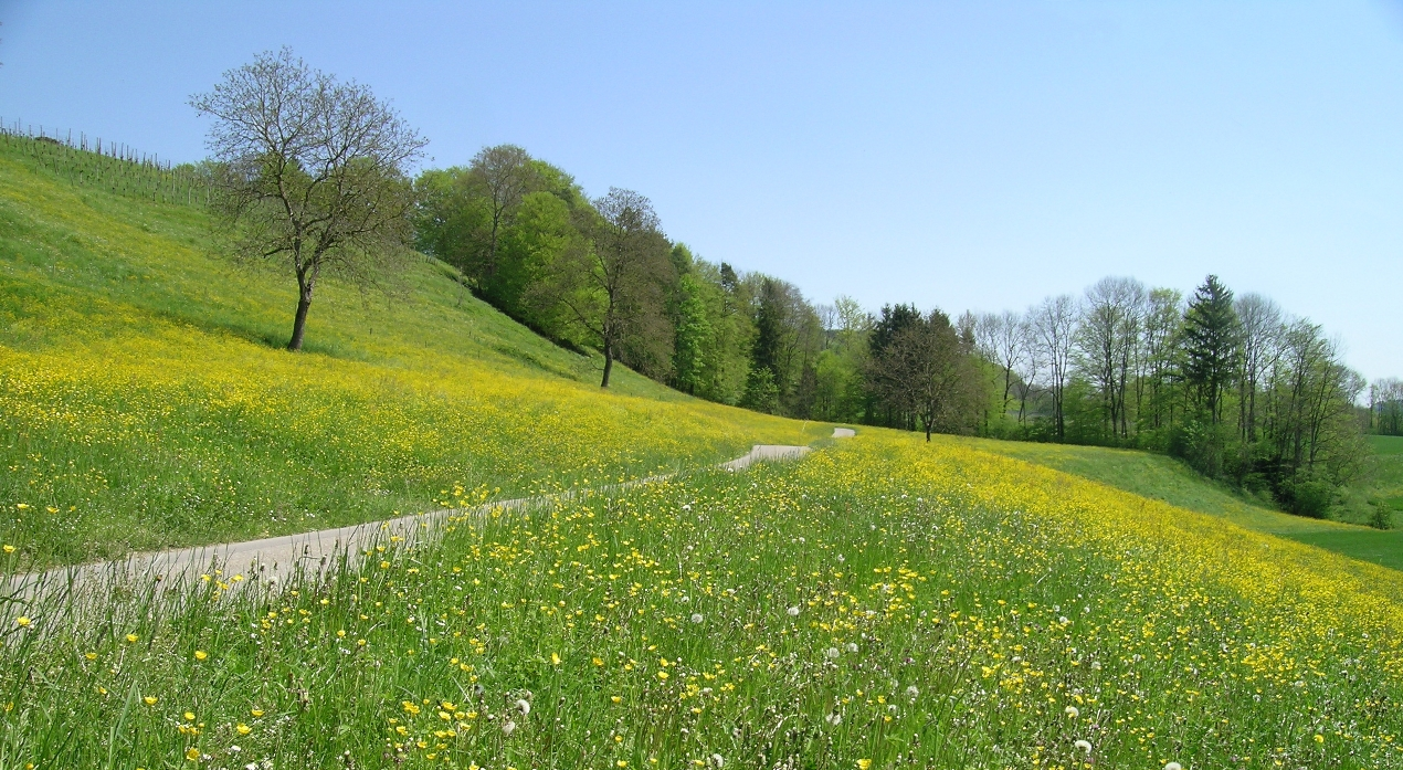 free spring wallpaper | spring backgrounds | hd spring ...
