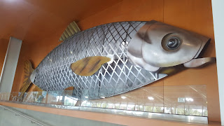 BIG Roach Fish. One of 72 BIG Fish of Victoria created for the 2006 Commonwealth Games