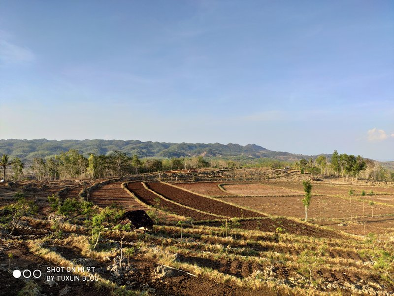 Hasil Foto Kamera Telephoto Xiaomi Mi 9T