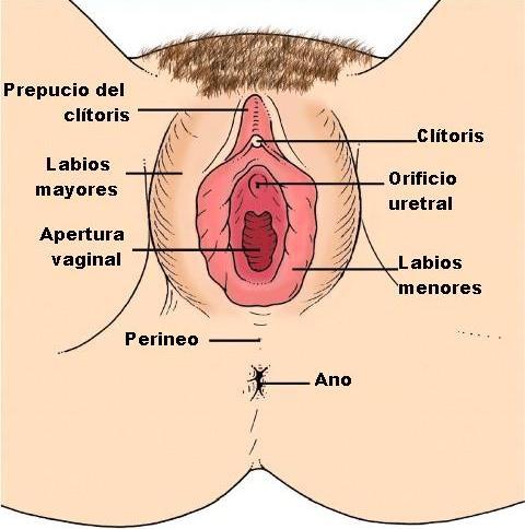 INSPECCION DE GENITALES FEMENINOS PDF DOWNLOAD