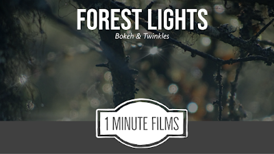 Forest Lights Bokeh Film
