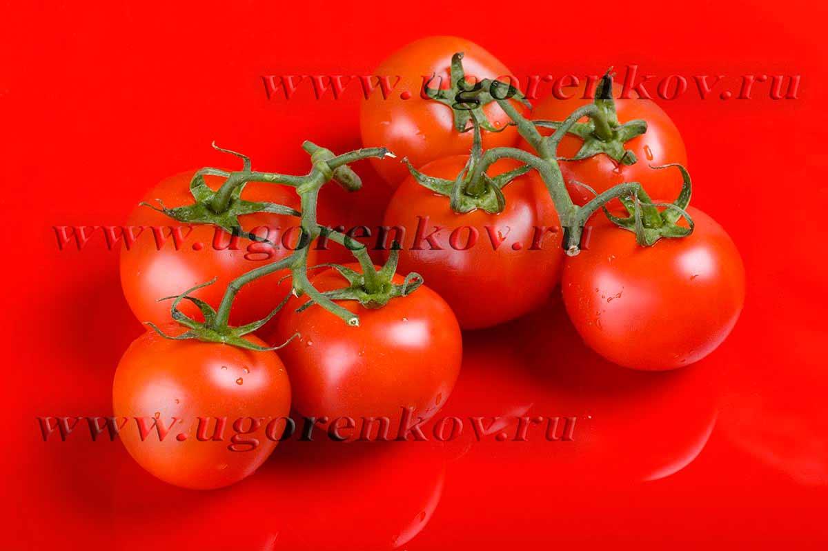 помидоры на ветке на красном фоне