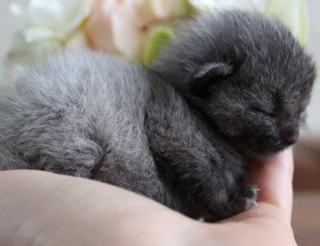 bruce a cute kitten