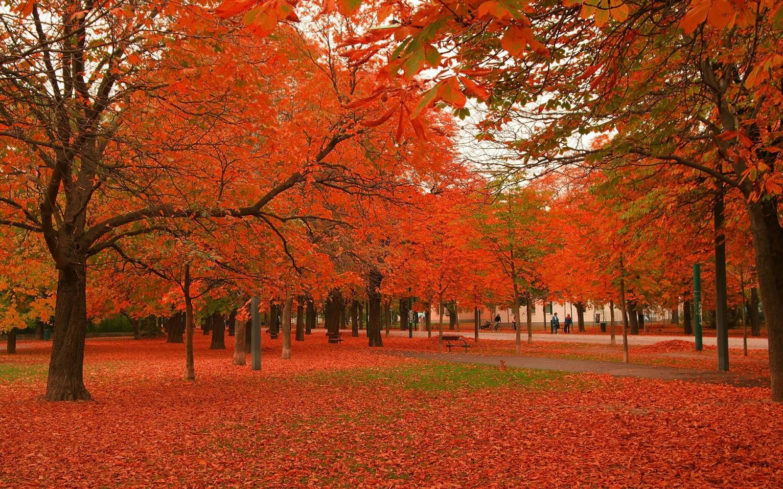 Desktop Wallpaper Pinterest Fall October Garden Amazing Admirable Seasonal Wallpapers For Desktop