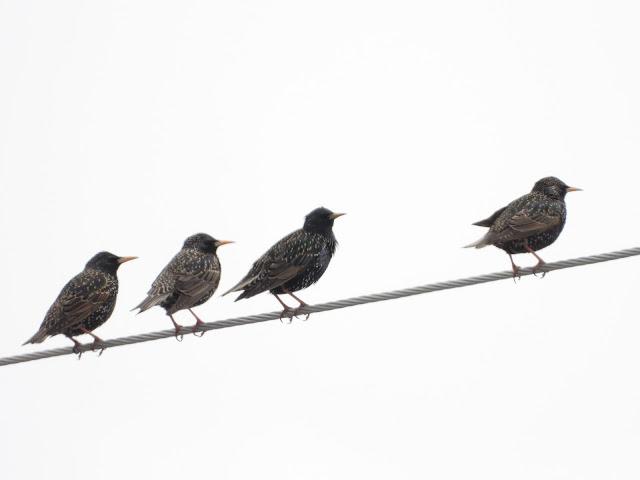 Bird & Travel Photos, Birding Sites, Bird Information