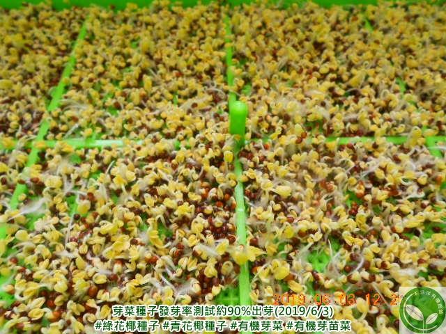 有機芽菜種子(有機芽苗菜種子) 發芽率測試:太平洋有機農藝-芽菜種子/芽菜機/豆芽機/芽菜箱/水耕盤
