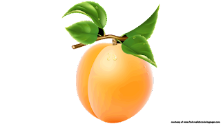 apricot royalty free clipart
