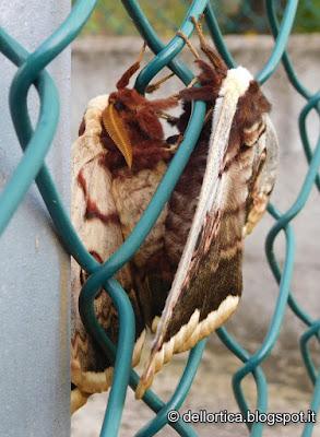 farfalle e falene nel giardino visitabile della fattoria didattica dell ortica a Savigno Valsamoggia Bologna vicino Zocca nell Appennino