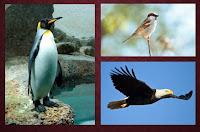 soal un biologi tentang kingdom animalia dunia hewan