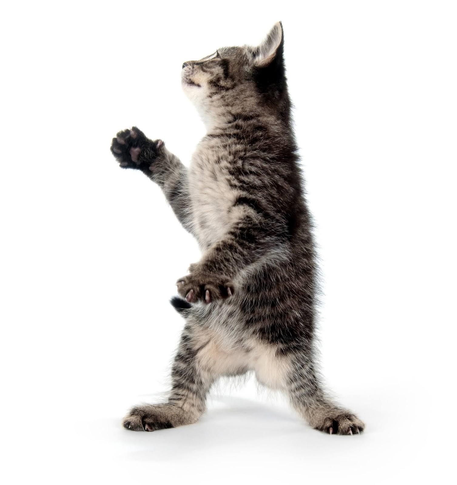 анимашка танцующий кот
