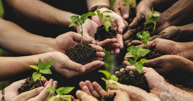 """San Severo, Avviso Pubblico: coprogettazione gestione percorso sperimentale """"Agricoltura Sociale"""". Lavoro per 10 giovani """"NEET"""""""