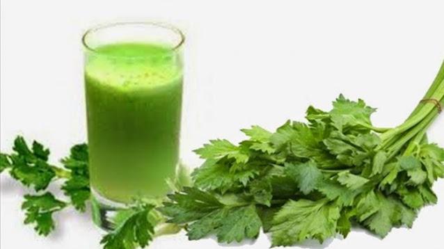 tanaman seledri bisa dijadikan jus untuk kesehatan