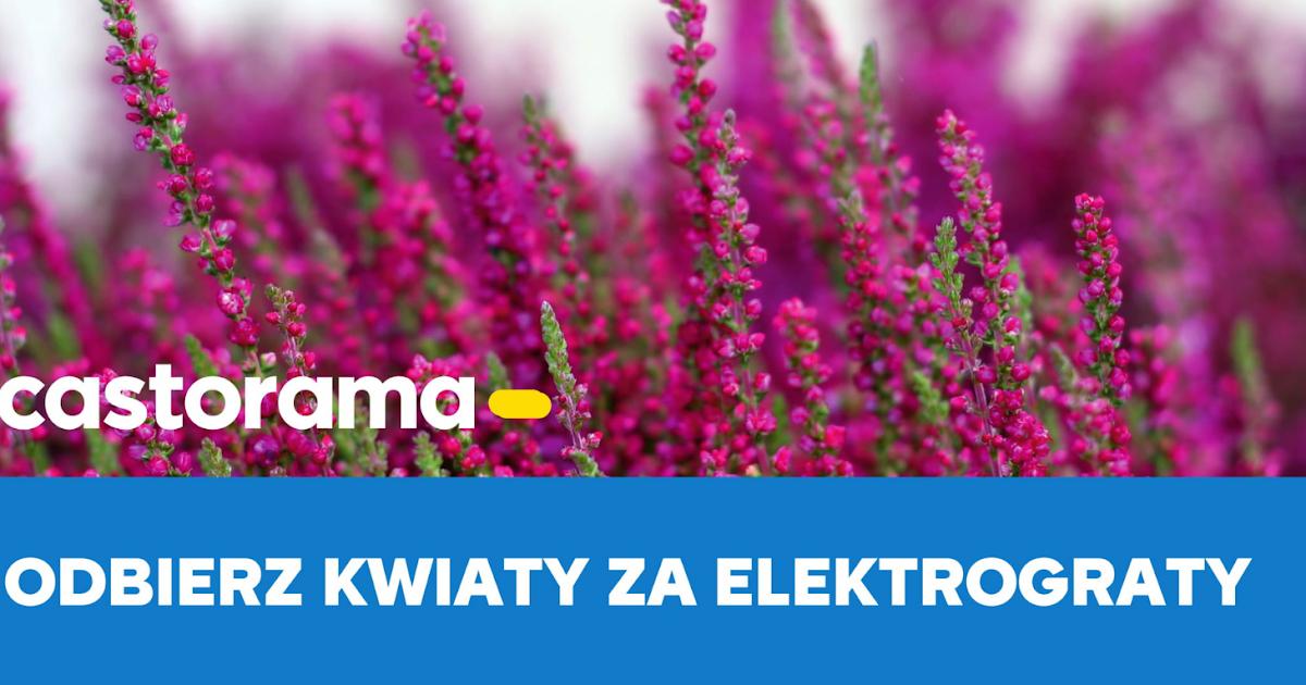 Kwiaty Za Elektrograty Czestochowskie Informacje