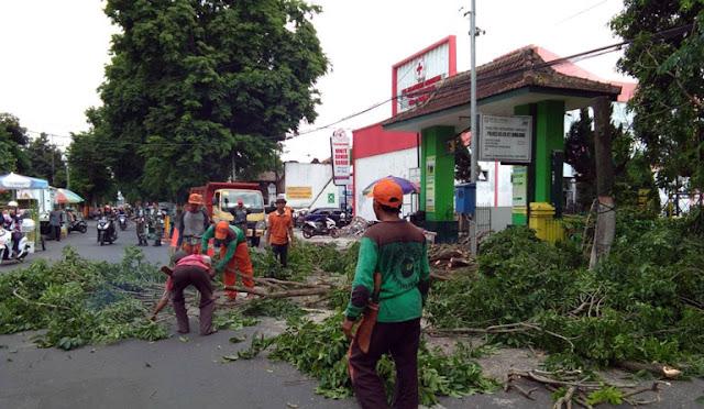 Penanganan pohon tumbang di Lumajang