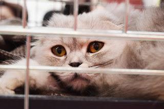 Gato en jaula Gatos de la Calle