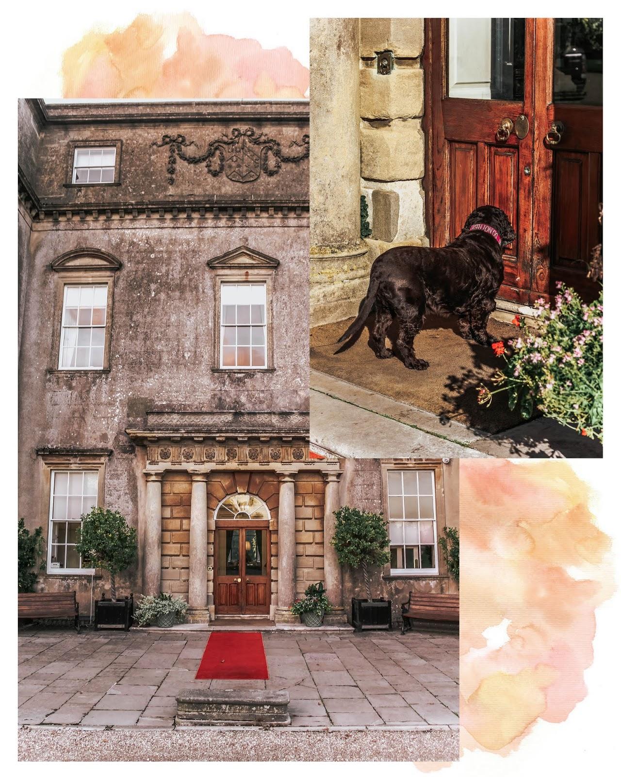 Ston Easton Park Hotel Resident Cocker Spaniel Dog