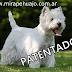 Patentes a lustradores y perros
