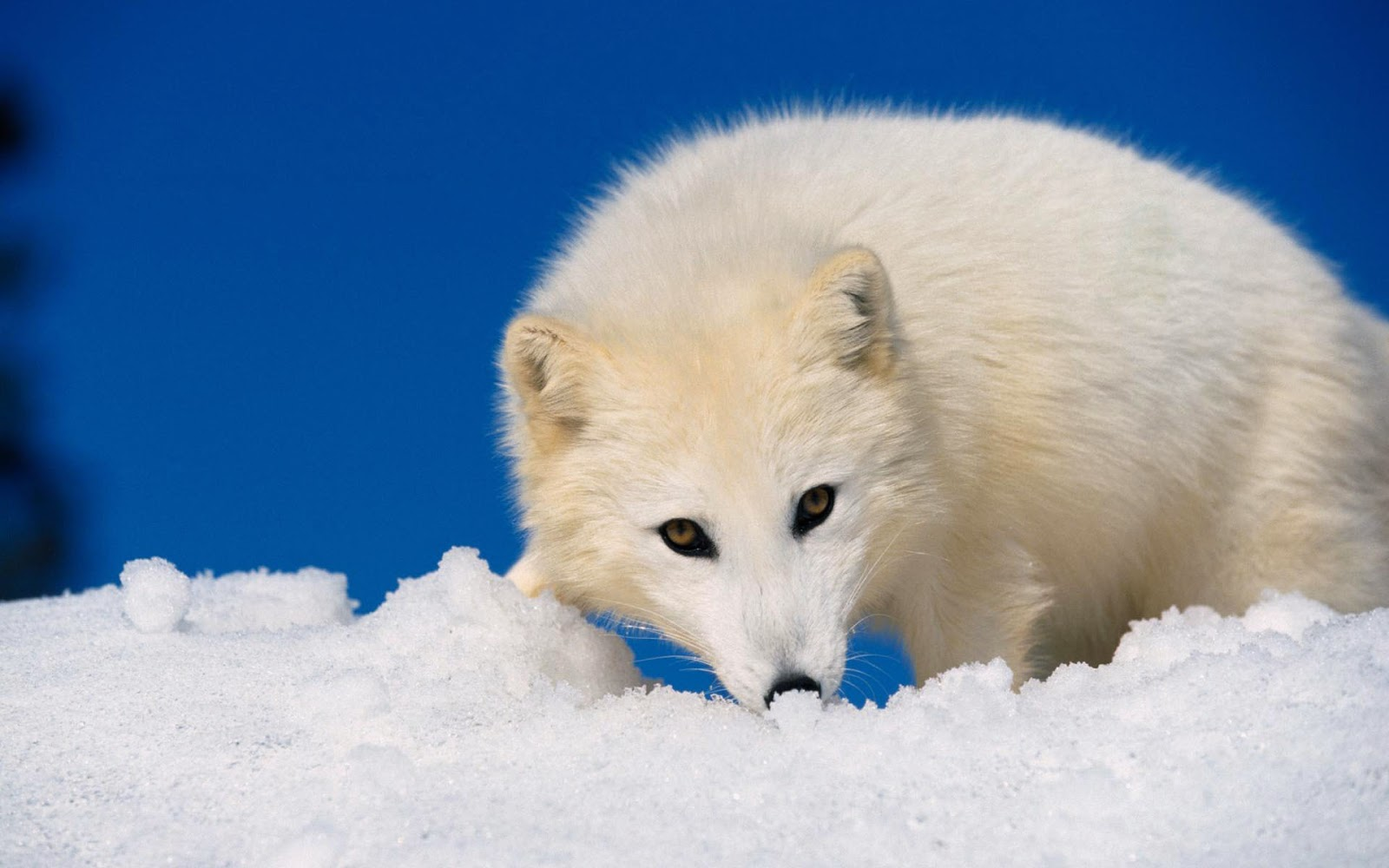 Little Critterz: 7 Perfectly Suited Winter Animals
