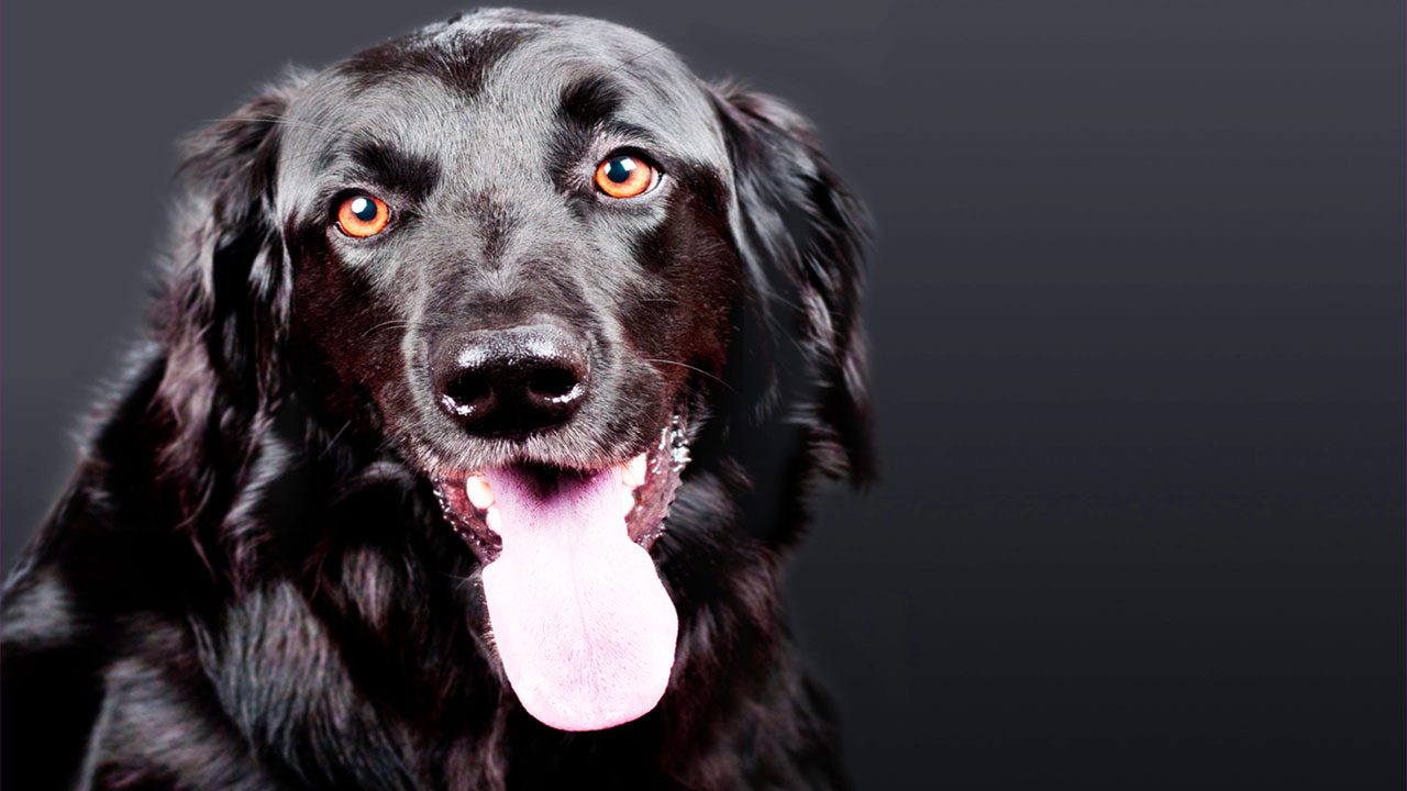 Long-Lasting Chews For Dogs