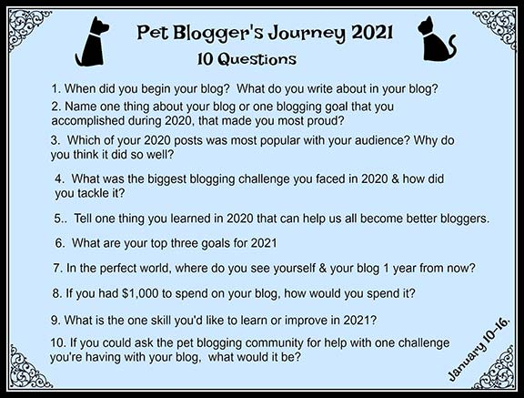 10 Questions on the Pet Bloggers Journey