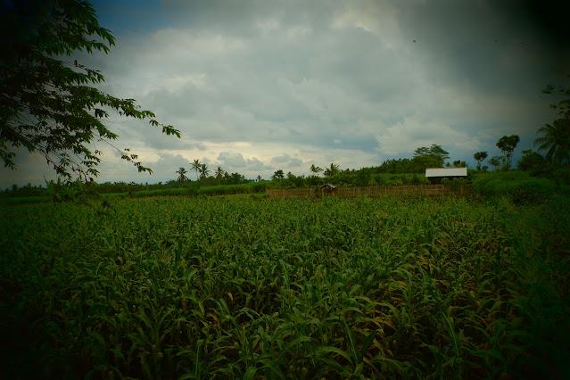 Embung Malangsuko