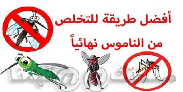 القضاء على الناموس نهائيا