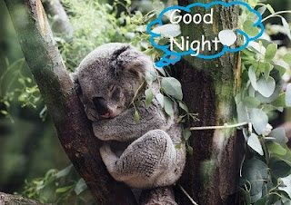 good night images with cute baby animals