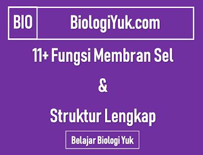 11+ Fungsi Membran Sel (Struktur Lengkap)