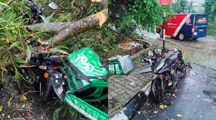 Maut Dihempap Pokok Ketika Hujan Lebat
