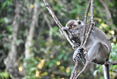 Giorno 6 - Bako National Park