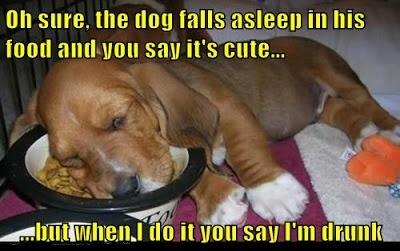Dog falls asleep in his food