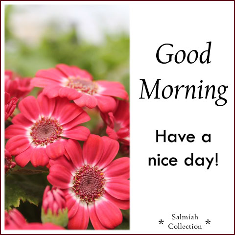 Good Morning Wish 21 Have A Nice Day Salmiah Collection