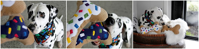 Dalmatian dog in birthday bandana playing with bone shaped stuffed toys.