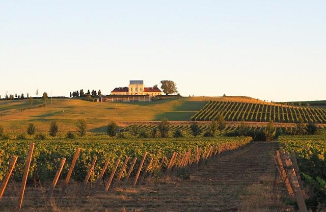 wijntoerisme kroatië, principovak, vina papak, grasevina, traminac, wijntoerisme slavonië, ilok, vukovar, srijem, kroatië,