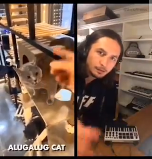 UNBELIEVABLE!!! Producer Collaborates With A Cat To Make Music [VIDEO]