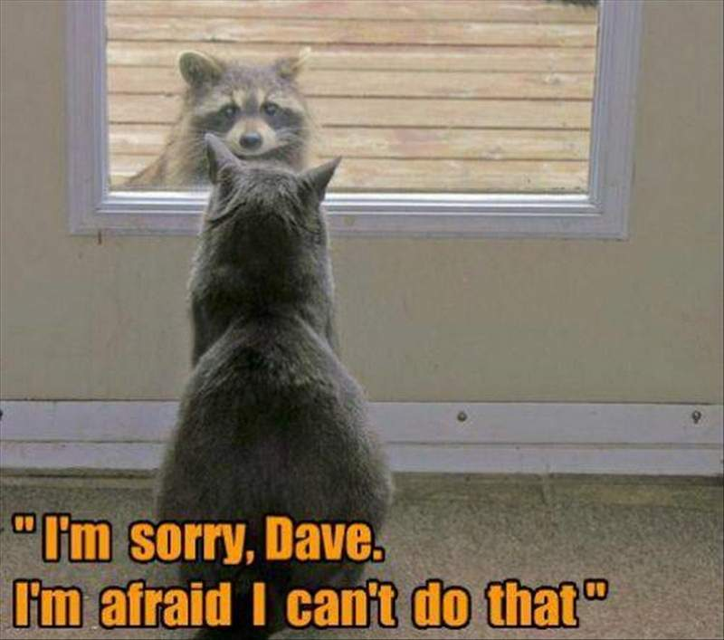 30 Funny animal captions, best funny captioned pics, animal meme, animal pictures with sayings