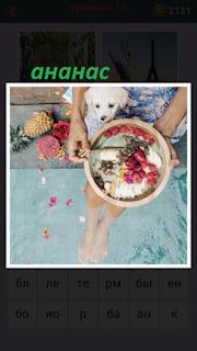 655 слов девушка ест с ногами в воде и рядом лежит ананас 13 уровень