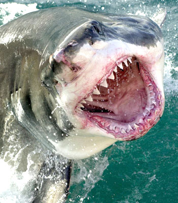 Letters for Fun: Shark Week is Scary!